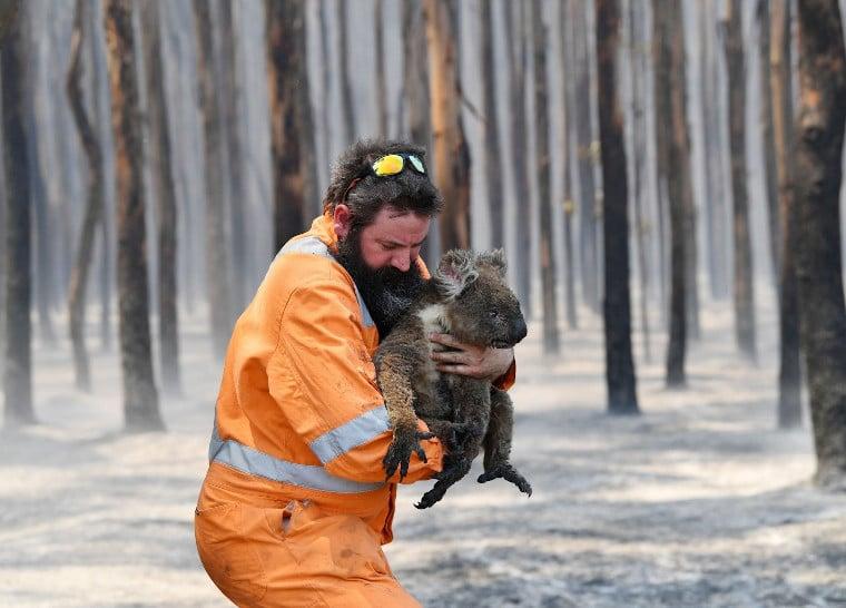 Adelaide wildlife rescuer Simon Adamczyk rescues a koala at a burning forest near Cape Borda on Kangaroo Island.